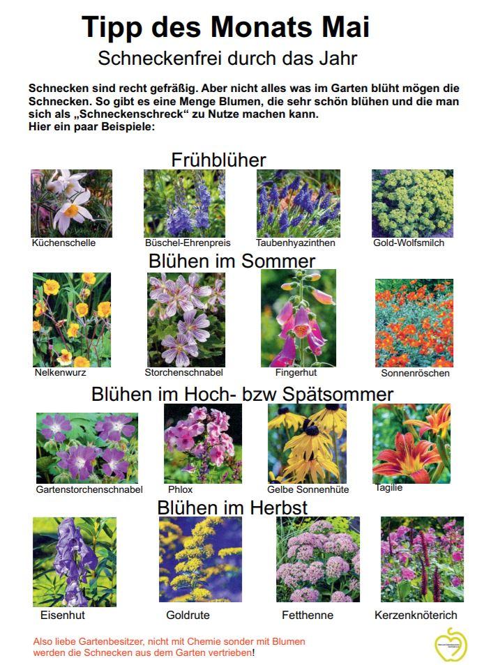 Gartentipp des OGV für den Monat Mai